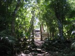 muyil_templo8_forest_l.jpg